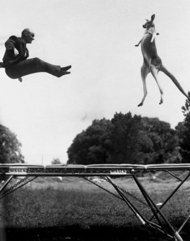 George Nissen and kangaroo Victoria, NYC 1936